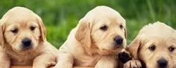 Pets Coupons