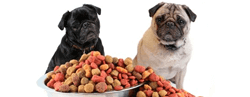 Pet Food Coupons