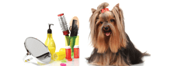 Pet Grooming offers, coupons, and promo codes